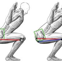 posterior-pelvic-tilt-squat.png