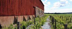 Utflyktstips: Sveriges första vingård