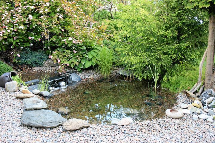 vattenspegel i trädgården