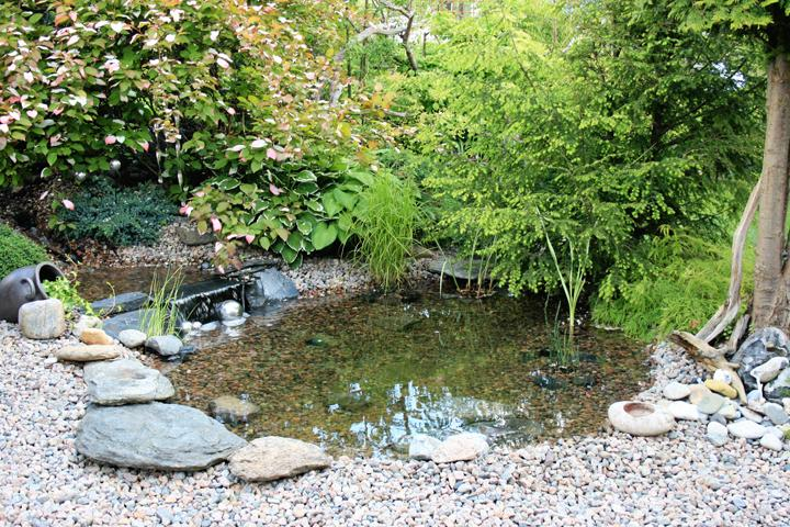 liten damm trädgård