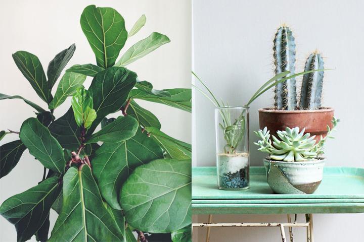 billiga gröna växter