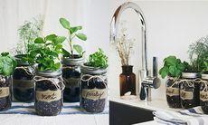 Så här planterar du din egen örtträdgård – i glasburkar
