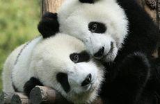 Nu går det att söka jobb som pandagosare