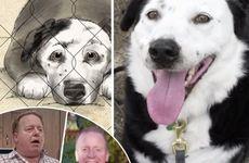 Hunden Peety blev adopterad – förändrade livet för hussen Eric