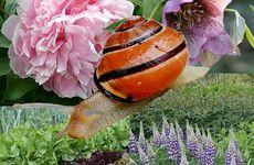 Växterna du ska undvika i trädgården (om du vill slippa mördarsniglar)