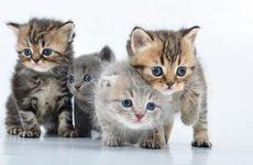 Varför är kattungen rädd för honkatten?