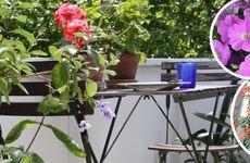 Balkonginspiration: Bästa blommorna för alla lägen!