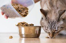 Klarar sig min katt enbart på torrfoder?