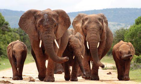 elefanter3-2500.jpg