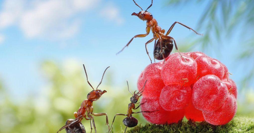 Så här blir du av med myror inomhus – 8 tips och råd