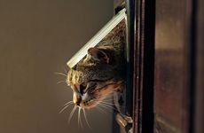 Varför är det okej att släppa ut sin katt?