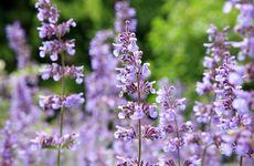 5 växter som håller krypen och myggorna borta