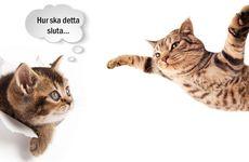21 bilder på katter tagna i rätt ögonblick