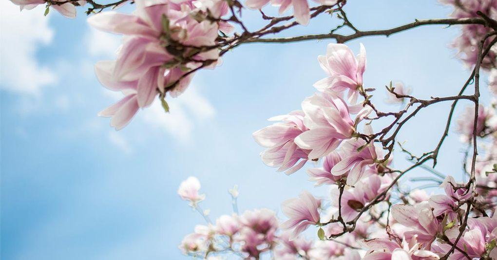 Klurigt quiz: Hur mycket kan du egentligen om blommor?