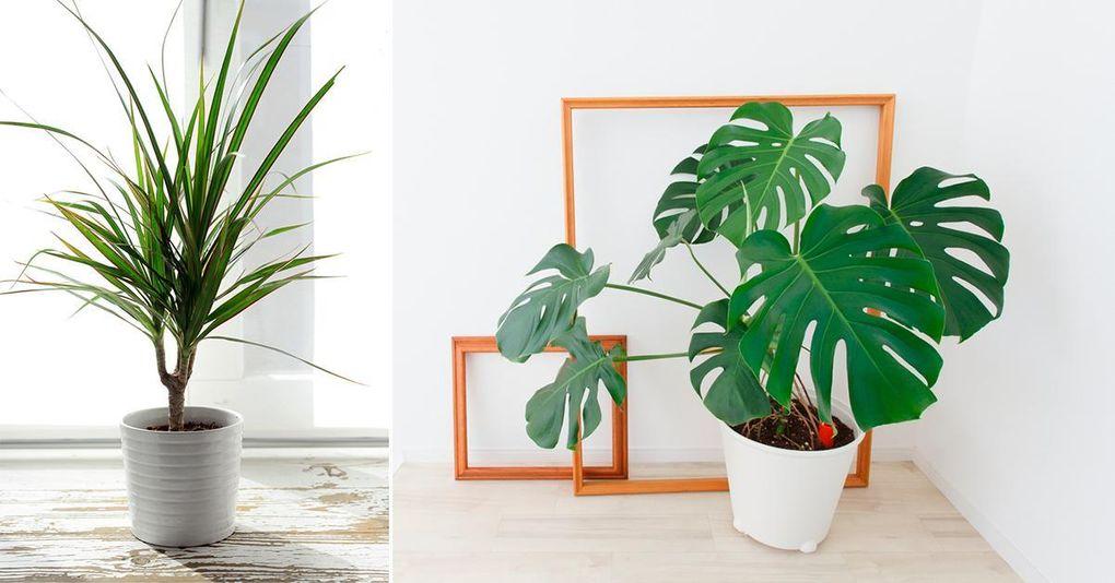 gröna växter som trivs i skugga