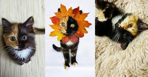 Varning för sötchock – Yana är den gulligaste katten vi sett på länge