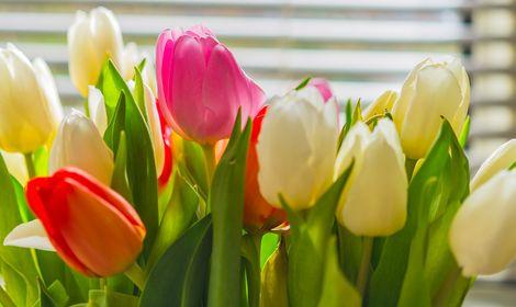 bigstock-Colorful-Tulip-Flower-Bouquet--141617564.jpg