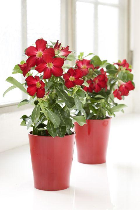 blommor som tål direkt solljus