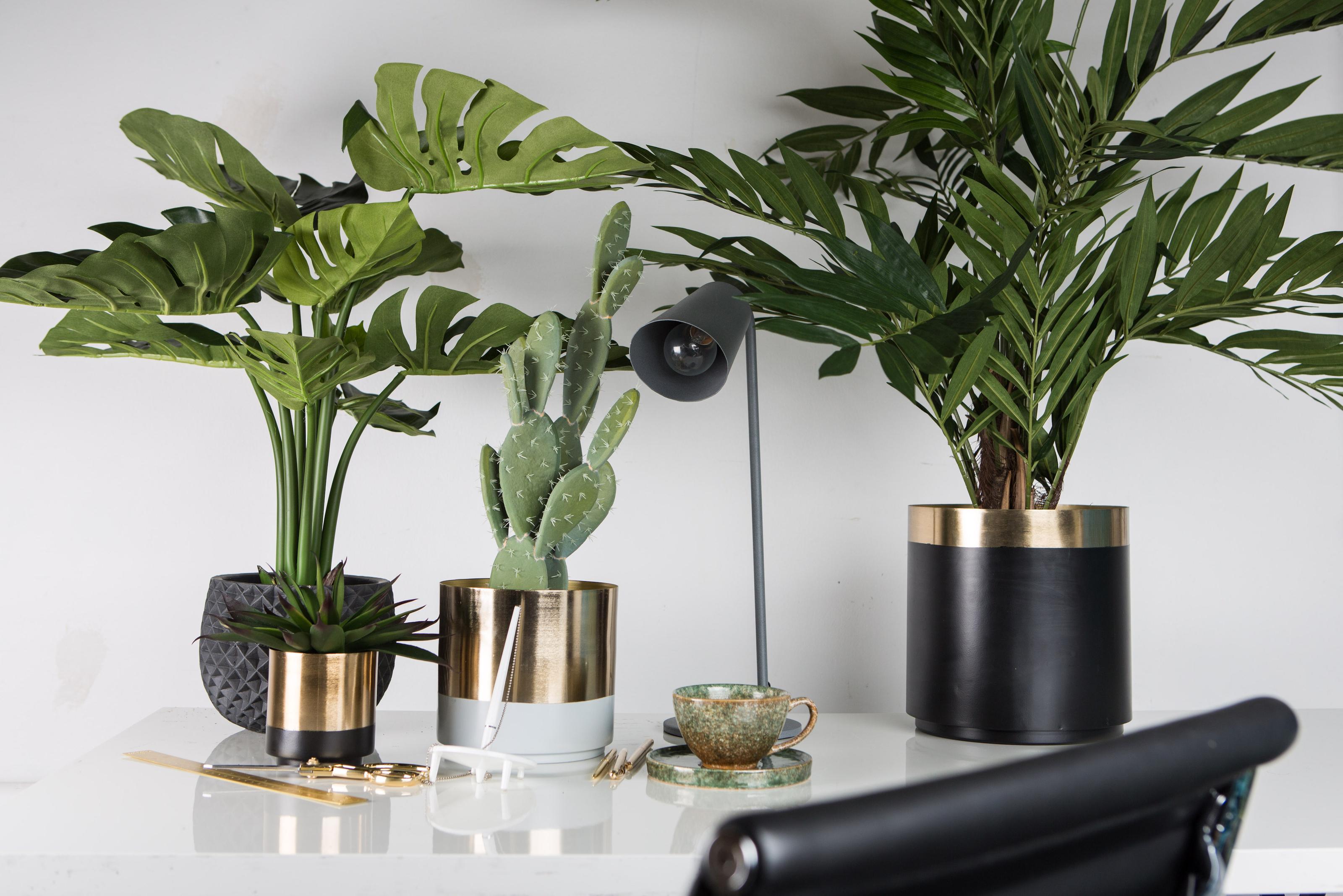 gröna växter plast