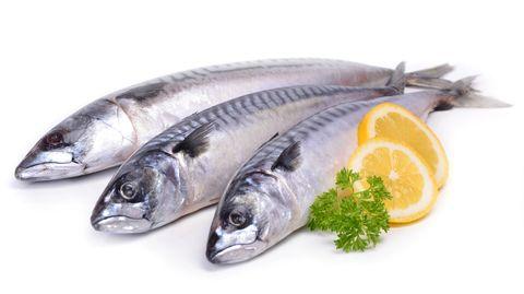 varför är fisk känsligare än kött
