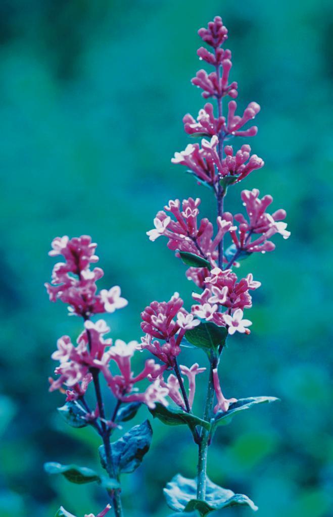 Tinkerbell  svävar verkligen som en fe över den omgivande grönskan med  sina lätta blomspiror 43efb3e4e98db