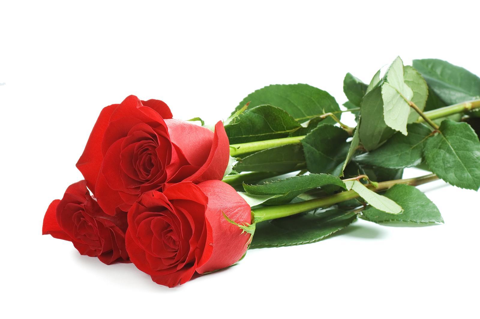 vad betyder fem röda rosor