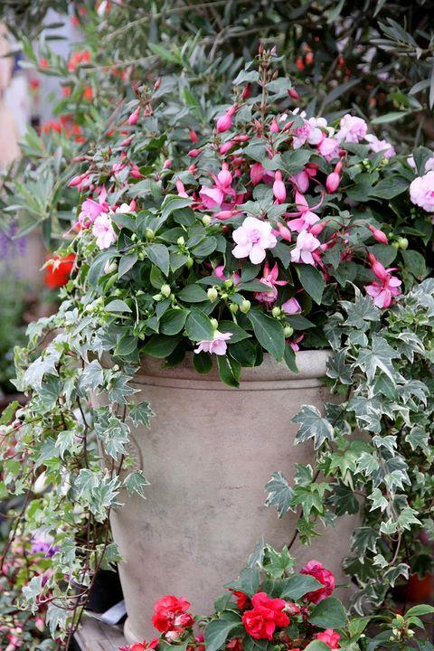 lättskötta blommor utomhus