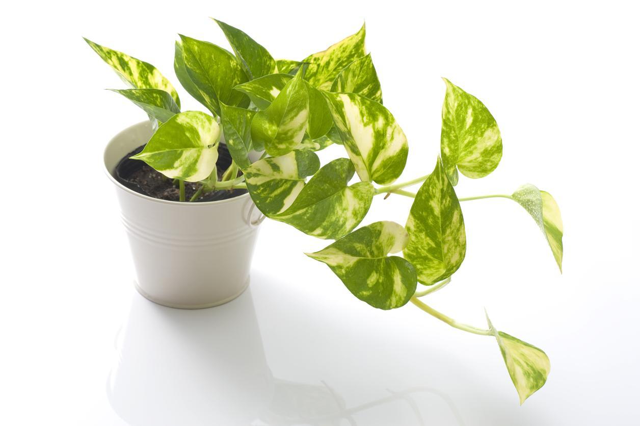 inomhusväxter som tål kyla