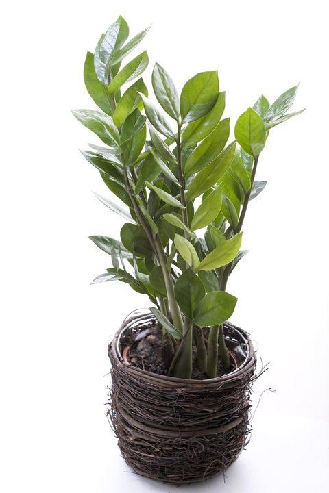 växter inne i rummet