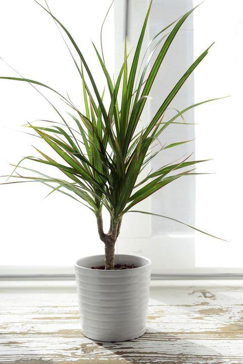 inomhusväxter som tål skugga